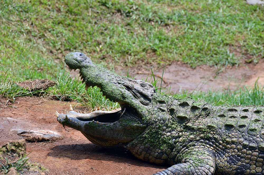 Safari & PheZulu Cultural Village Day Tour