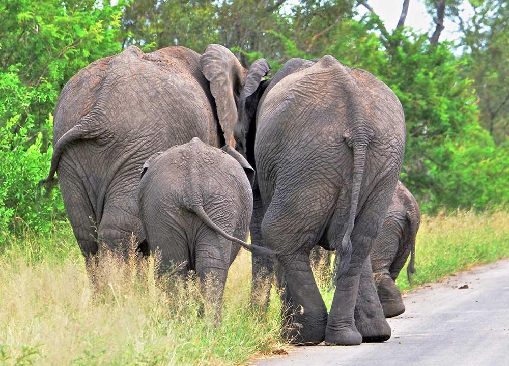 Zulu Safaris DURBAN South Africa - 2 Days Hluhluwe Imfolozi Safari Tour