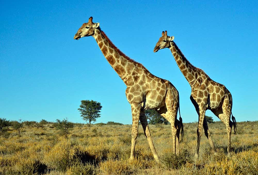 Zulu Safaris - DURBAN South Africa Half Day Safari from Durban