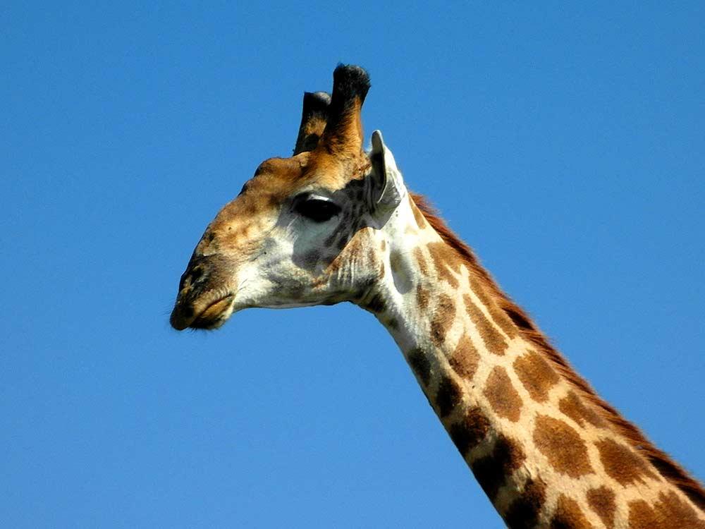 Zulu Safaris DURBAN South Africa - Hluhluwe Imfolozi Safari & iSimangaliso St Lucia Day Tour