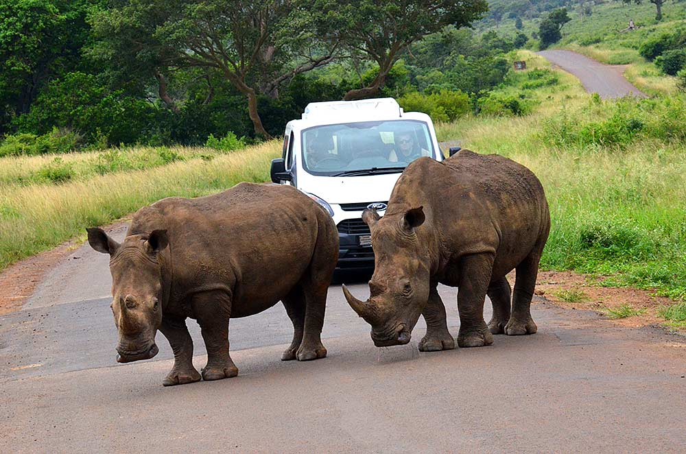 Zulu Safaris South Africa - Hluhluwe Imfolozi Safari Day Tour