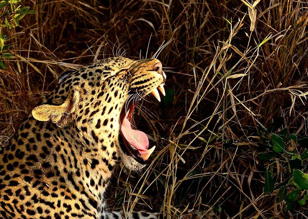 Zulu Safaris DURBAN South Africa - Hluhluwe Imfolozi Open Vehicle Game Drive