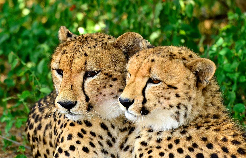 Zulu Safaris DURBAN South Africa - St Lucia iSimangaliso Boat Safari & Emdoneni Wild Cat Day Tour
