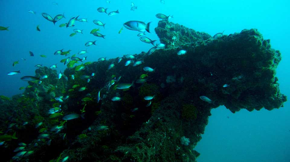 Zulu Safaris - Scuba Diving Tours From Durban SOUTH AFRICA