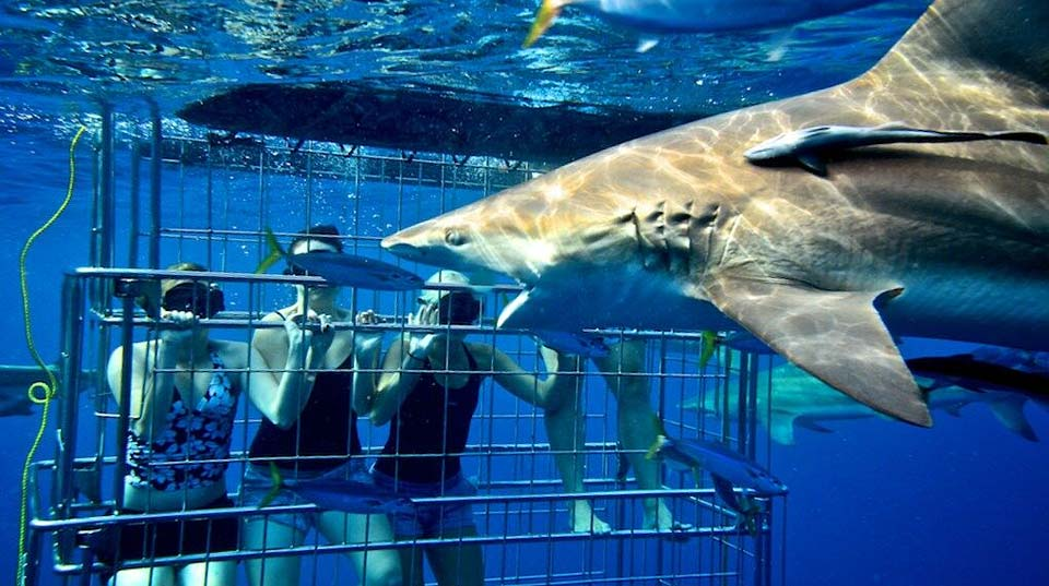 Zulu Safaris - Shark Cage Diving Tours From Durban SOUTH AFRICA